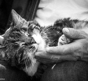 Υπέροχες στιγμές γατίσιας τρυφερότητας & ευχαρίστησης- Όταν το πιο ανεξάρτητο ζώο του πλανήτη αφήνεται στα χάδια... (ΦΩΤΟ) - Κυρίως Φωτογραφία - Gallery - Video