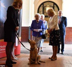 Η βασίλισσας Ελισάβετ ενθουσιασμένη παρακολουθεί επίδειξη σκύλων που μυρίζονται ασθένειες & σώζουν ζωές (ΦΩΤΟ - ΒΙΝΤΕΟ)   - Κυρίως Φωτογραφία - Gallery - Video