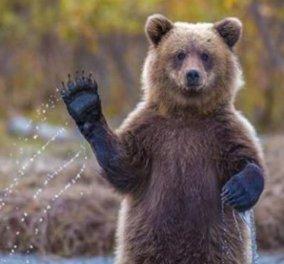 Αρκούδα εμφανίστηκε σε χωριό της Καστοριάς κι έκανε βόλτες (Βίντεο) - Κυρίως Φωτογραφία - Gallery - Video