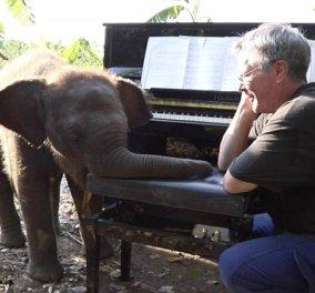 Υπέροχα στιγμιότυπα - Τυφλός ελέφαντας χορεύει στον ρυθμό της μουσικής ενώ ένας άντρας παίζει πιάνο (Φωτό & Βίντεο) - Κυρίως Φωτογραφία - Gallery - Video