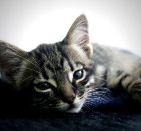 Επικό βίντεο: Μια γάτα μυρίζει τη μασχάλη του αφεντικού της, ζαλίζεται και λιποθυμά (Βίντεο)  - Κυρίως Φωτογραφία - Gallery - Video