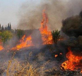 Τα μέτρα για την άμεση ανακούφιση των πληγέντων από τις πυρκαγιές (Φωτό) - Κυρίως Φωτογραφία - Gallery - Video
