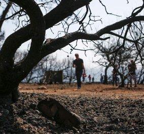 Πυρκαγιές στην Αττική: 91 νεκροί -25 τραυματίες ο τραγικός απολογισμός μέχρι τώρα - Κυρίως Φωτογραφία - Gallery - Video