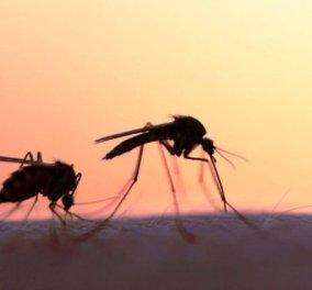 22 ασθενείς, 9 στην ΜΕΘ από τον ιό του Δυτικού Νείλου, σύμφωνα με την ΚΕΕΛΠΝΟ - Κυρίως Φωτογραφία - Gallery - Video