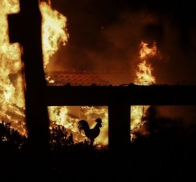 Πυρκαγιές στην Αττική: Οι νεκροί έφτασαν τους 74 - 164 οι ενήλικες τραυματίες, 23 παιδιά από τις πυρκαγιές στην Αν. Αττική (Βίντεο) - Κυρίως Φωτογραφία - Gallery - Video