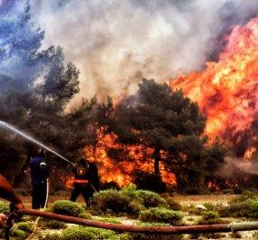 Ο Όμιλος ΟΤΕ από την πρώτη στιγμή δίπλα στους ανθρώπους που επλήγησαν από τις καταστροφικές πυρκαγιές  - Κυρίως Φωτογραφία - Gallery - Video