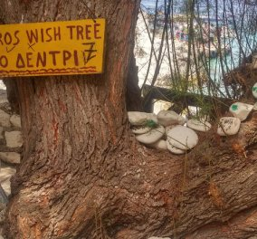 Good news: Το «μαγικό» δέντρο των ευχών στους Αντίπαξους - Κυρίως Φωτογραφία - Gallery - Video