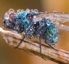 "Oι αριστουργηματικές λήψεις του φωτογράφου Martin Amm με την φύση να μας μαγεύει - Έντομα ""βουτηγμένα"" στη δροσιά   - Κυρίως Φωτογραφία - Gallery - Video"