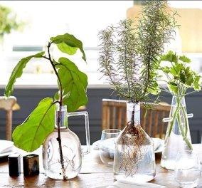 16 φυτά εσωτερικού χώρου μεγαλώνουν στο νερό, χωρίς χώμα - Το σπίτι σας γίνεται μικρή ζούγκλα (φωτό) - Κυρίως Φωτογραφία - Gallery - Video