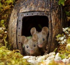 Μια ολόκληρη οικογένεια από μικρά ποντικάκια & το δικό τους χωριό - Πως σας φαίνεται; Φώτο  - Κυρίως Φωτογραφία - Gallery - Video