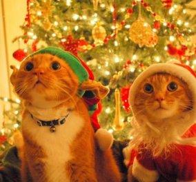Μύρισαν Χριστούγεννα! Απίθανα ζωάκια φοράνε τα γιορτινά τους ρούχα και μας συναρπάζουν - Φώτο  - Κυρίως Φωτογραφία - Gallery - Video