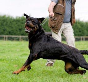 Σοκαριστικό: Συμμορίες στην Βρετανία εκτρέφουν σκυλιά-δολοφόνους για «ακραίο κυνήγι» - Κυρίως Φωτογραφία - Gallery - Video