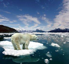 SOS από τους επιστήμονες: Το κλίμα της Γης το 2030 θα μοιάζει με εκείνο πριν από 3 εκατ. χρόνια! - Κυρίως Φωτογραφία - Gallery - Video