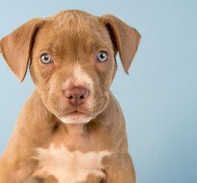 Χανιά: Πιτ μπουλ δάγκωσε νεαρό στα γεννητικά όργανα - Ο ιδιοκτήτης του σκύλου γελούσε, η γιατρός έκλαιγε - Κυρίως Φωτογραφία - Gallery - Video