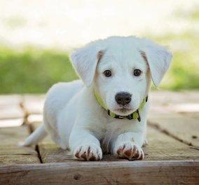 Μαζική δολοφονία σκύλων στο Μεσολόγγι - Τους δηλητηρίασαν με φόλες - Πέντε πέθαναν  - Κυρίως Φωτογραφία - Gallery - Video