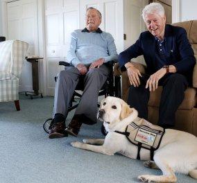 Συγκίνηση: Το πιστό σκυλί του Τζορτζ Μπους του Πρεσβύτερου δεν φεύγει από το φέρετρο του πρώην Προέδρου! (Φωτό) - Κυρίως Φωτογραφία - Gallery - Video