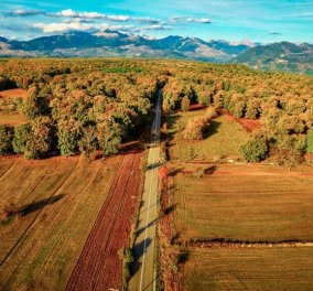 Δάσος Φολόης: Εκεί που ζούσαν οι Κένταυροι σε ένα καταπληκτικό βίντεο - Κυρίως Φωτογραφία - Gallery - Video