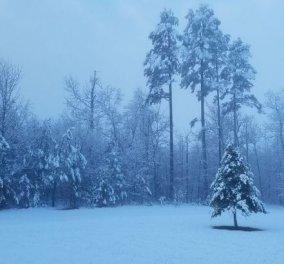 Εντυπωσιακό timelapse βίντεο: Ο χιονιάς περνάει και τα σκεπάζει όλα στην Βιρτζίνια των ΗΠΑ - Κυρίως Φωτογραφία - Gallery - Video