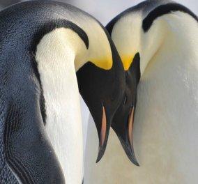 Μοναδικά βίντεο με αξιολάτρευτα ζώα που ζευγαρώνουν μια ζωή το ένα με το άλλο  - Κυρίως Φωτογραφία - Gallery - Video