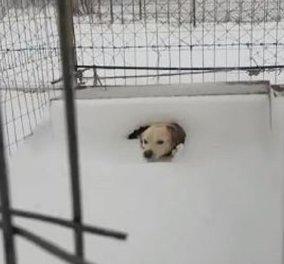 Θλίψη και οργή προκαλεί το βίντεο με το σκύλο στην παγωμένη Λήμνο - Τον άφησαν δεμένο έξω στο χιόνι! - Κυρίως Φωτογραφία - Gallery - Video