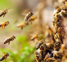 Απίθανο! Μέλισσες & ψάρια «επικοινωνούν» για πρώτη φορά μέσω ρομπότ (φωτό & βίντεο) - Κυρίως Φωτογραφία - Gallery - Video