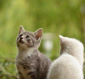 Πανελλήνια οργή:  Σκοτώνει γάτες & δίνει στο facebook την συνταγή για φόλες -  Θύελλα αντιδράσεων για τη γυναίκα από το Ρέθυμνο (φώτο) - Κυρίως Φωτογραφία - Gallery - Video