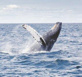 """Βίντεο: Η βουτιά της ημέρας: Γιγαντιαία φάλαινα κάνει """"splash"""" και λούζει τους τουρίστες! - Κυρίως Φωτογραφία - Gallery - Video"""