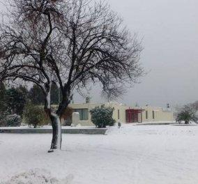 Ποια άνοιξη; Χθες και σήμερα χειμώνας ξανά - 19 βαθμούς έπεσε η θερμοκρασία στη Βόρεια Ελλάδα (φώτο -βίντεο) - Κυρίως Φωτογραφία - Gallery - Video
