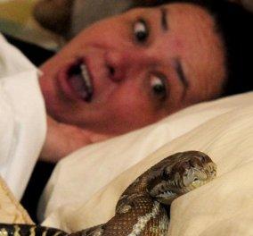 Βίντεο: Η στιγμή που μια γιαγιά κοιμάται στην Ταϊλάνδη και ο πύθωνας της δαγκώνει το πόδι  - Κυρίως Φωτογραφία - Gallery - Video