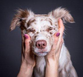 Ένα υπέροχο φωτογραφικό project με πορτραίτα σκύλων: Αξιολάτρευτα και στον φακό  - Φώτο - Κυρίως Φωτογραφία - Gallery - Video