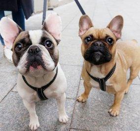 Κάποιος αποφάσισε να φωτογραφίσει 30 σκυλάκια στην Λιθουανία - H χώρα με τους περισσότερους σκύλους στην Ευρώπη - Φώτο   - Κυρίως Φωτογραφία - Gallery - Video