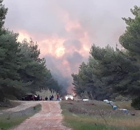 """Εφιαλτική νύχτα για τη Στροφυλιά: Εικόνες βιβλικής καταστροφής από την πυρκαγιά που """"καταπίνει"""" το προστατευόμενο δάσος (φώτο-βίντεο) - Κυρίως Φωτογραφία - Gallery - Video"""