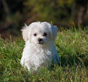Dog shaming: O Γιώργος Φρατζεσκάκης εξηγεί τι είναι και γιατί δεν πρέπει να μας απασχολεί - Κυρίως Φωτογραφία - Gallery - Video