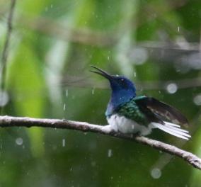 Καιρός: Ο Απρίλης επιμένει να φέρεται σαν Νοέμβρης: Σάββατο με βροχές & καταιγίδες  - Κυρίως Φωτογραφία - Gallery - Video