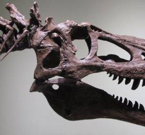 Το eBay εξηγεί πώς να αποκτήσετε τον δικό σας... τυραννόσαυρο - Κοστίζει 3 εκατ. δολάρια! - Κυρίως Φωτογραφία - Gallery - Video