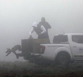 Η συγκινητική στιγμή που πέντε ορφανά αρκουδάκια επέστρεψαν ξανά στη φύση (φωτό)  - Κυρίως Φωτογραφία - Gallery - Video