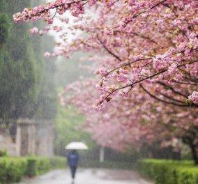 Η Άνοιξη μας ξέχασε - Άστατος ο καιρός για σήμερα Τρίτη με πτώση της θερμοκρασίας και βροχές! - Κυρίως Φωτογραφία - Gallery - Video
