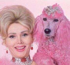 Vintage pics: Η Zsa Zsa Gabor, ροζ οπτασία με το κανίς της – Κοσμήματα μυθικής αξίας - Κυρίως Φωτογραφία - Gallery - Video