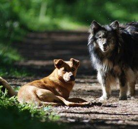 45χρονος βρέθηκε νεκρός με 100 δαγκωματιές - Αγέλη σκύλων του επιτεθήκαν όταν λοξοδρόμησε μέσα σε δάσος - Κυρίως Φωτογραφία - Gallery - Video