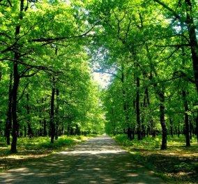 Κι αν η φυτέψουμε στον πλανήτη 1 τρισ. δέντρα, θα σωθούμε από την κλιματική αλλαγή; - Κυρίως Φωτογραφία - Gallery - Video