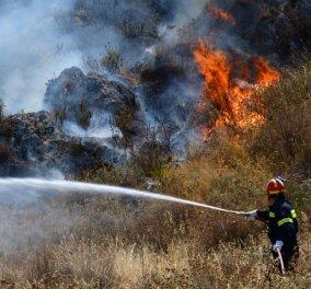 Υπό μερικό έλεγχο οι φωτιές σε Ραφήνα και Βαρνάβα (φωτό) - Κυρίως Φωτογραφία - Gallery - Video