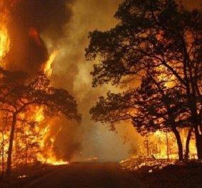 Όλοι για την καταστροφή του Αμαζονίου: Λεονάρντο Ντι Κάπριο, Μαντόνα, Σάλμα Χάγιε, Ζιζέλ - Οι φωτό και οι αναρτήσεις τους...  - Κυρίως Φωτογραφία - Gallery - Video