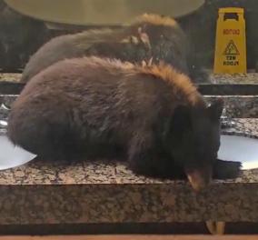 Βίντεο: Απίστευτη αρκουδίτσα εισέβαλε σε μπάνιο ξενοδοχείου και πήρε έναν υπνάκο... - Κυρίως Φωτογραφία - Gallery - Video