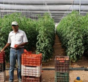 Story of the day: O Iνδός αγρότης που ήρθε με 200 δολάρια στην Ελλάδα 19 χρονών – Σήμερα τον λένε Σπύρο & καλλιεργεί 1000 στρέμματα (φωτό) - Κυρίως Φωτογραφία - Gallery - Video