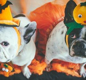 Halloween: Οι Αμερικανοί ξοδεύουν 490 εκατ. δολάρια για να ντύσουν τα κατοικίδια τους με κοστούμια  - Κυρίως Φωτογραφία - Gallery - Video