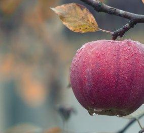 Αυτά είναι τα καλύτερα Φθινοπωρινά τρόφιμα - Βάλτε τα στο διαιτολόγιό σας! - Κυρίως Φωτογραφία - Gallery - Video