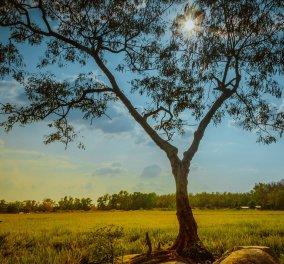 Καιρός: Ηλιοφάνεια και σήμερα, Τετάρτη με τον υδράργυρο να αγγίζει τους 30!  - Κυρίως Φωτογραφία - Gallery - Video