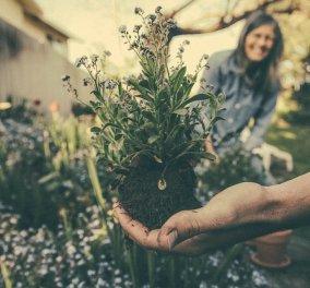 Aυτά είναι τα 4 οφέλη της κηπουρικής για την υγεία μας! - Κυρίως Φωτογραφία - Gallery - Video