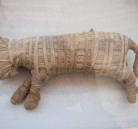 Λιοντάρια, κροκόδειλοι & σπάνια πουλιά: Για πρώτη φορά στο φως σπάνιες μούμιες ζώων στη νεκρόπολη Σακάρα της Αιγύπτου  (φώτο-βίντεο) - Κυρίως Φωτογραφία - Gallery - Video
