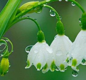 Βροχερός ο καιρός και σήμερα με βελτίωση από το μεσημέρι & μετά  - Κυρίως Φωτογραφία - Gallery - Video